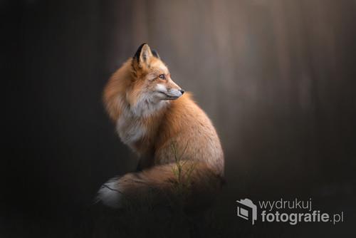 Portret lisa rudego w lesie.  Zdjęcie było jednym z najpopularniejszych zdjęć na serwisie Flickr w roku 2017.   Zdjęcie jest częścią projektu Untamed Spirits przedstawiającego prawdziwe dusze dzikich - i nie tylko - zwierząt, takich jak lisy, wilki ale także psy ras takich jak Wilczak Czechosłowacki czy Wolfdog Amerykański w mrocznych okolicznościach przyrody, klimatycznych lasach, jeziorach.
