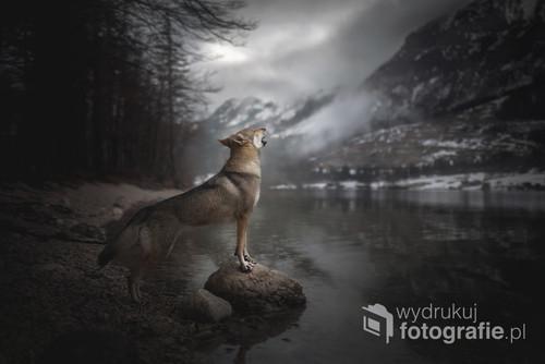Pies rasy Wilczak Czechosłowacki nad jeziorem Grundlsee w Austrii.   Zdjęcie jest częścią projektu Untamed Spirits przedstawiającego prawdziwe dusze dzikich - i nie tylko - zwierząt, takich jak lisy, wilki ale także psy ras takich jak Wilczak Czechosłowacki czy Wolfdog Amerykański w mrocznych okolicznościach przyrody, klimatycznych lasach, jeziorach.