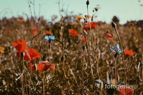 Wczesny poranek, cisza i tylko śpiew ptaków, delikatny szum wiatru. Moja oaza spokoju. Kocham łąki za jej świeżość, dzikość, nieregularność i te kolory. Różnorodność, paleta kolorów tworzą tak spójny obraz.