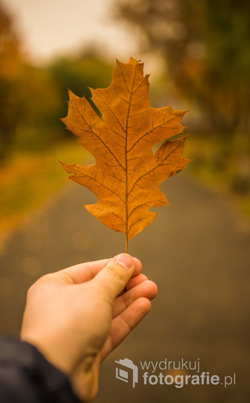 Jesienny liść uchwycony w parku. Dosłownie.