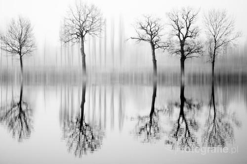 Odbicie drzew rosnących nad wodą.