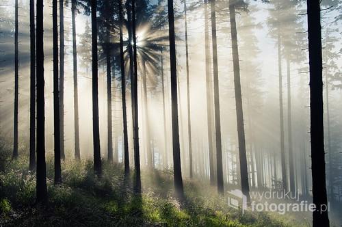Zdjęcie przedstawia poranek w lesie na Równicy-Ustroń