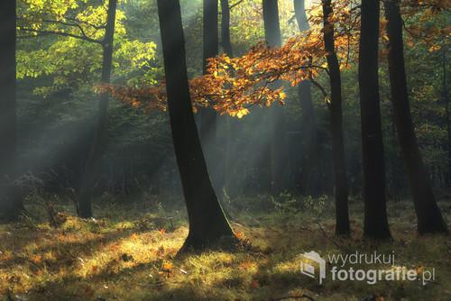 Las w Goczałkowice Zdrój