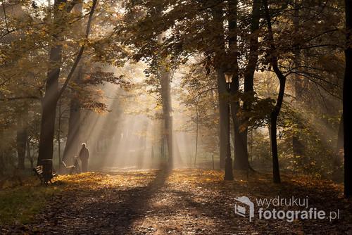 Promienie światła w parku w Pszczynie.