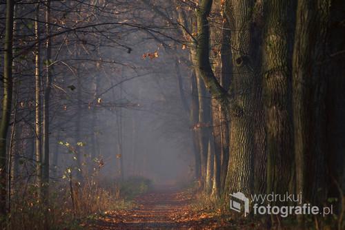Leśna droga w Goczałkowicach.