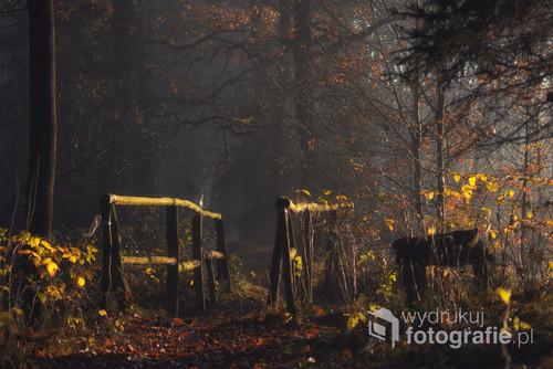 Jesienny las w Ćwiklicach.