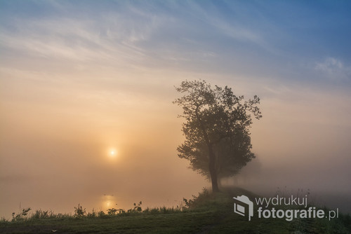 Majowy poranek i przebijające się przez gęstą mgłę słońce...stawy w Czechowicach Dziedzicach.
