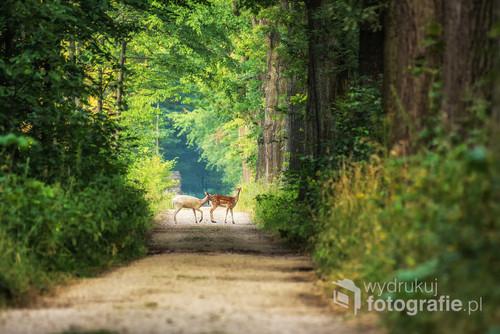 Dwa Daniele spacerujące po leśnej ścieżce w Goczałkowicach Zdrój.