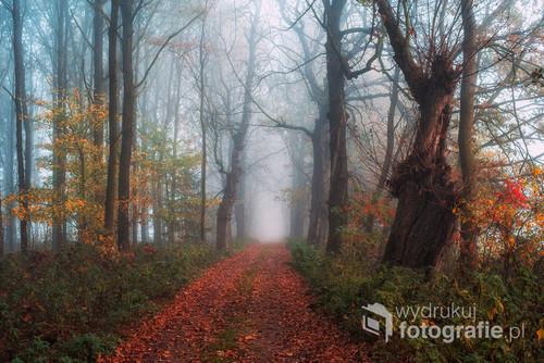 Las w Ćwiklicach jesienią.