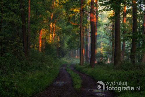 Las oświetlony pierwszymi promieniami słońca.