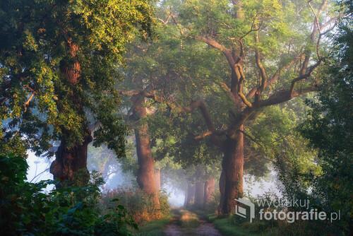 Wrześniowy poranek i długo wyczekiwana mgła. Niby jeszcze lato ale w powietrzu czuć już jesień. Czechowice Dziedzice