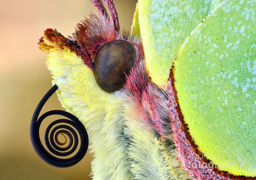 Na zdjęciu widzimy kawałek motyla w dużym powiększeniu.