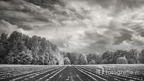 Czarno - białe zdjęcie zrobione w podczerwieni (IR)