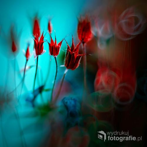 Malowane obiektywem . Inspirowane naturą , kolorami i wyobraźnią.