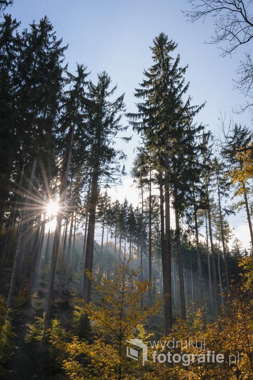 Zdjęcie zostało wykonane jesiennym, chłodnym porankiem. Drzewa otoczone były lekką mgłą, przez które nagle zaczęło przebijać się słońce, dając ciekawy klimat i ocieplenie, którego było mi brak tego dnia.