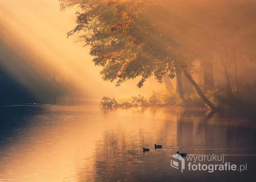 Fotografia wykonana w Parku Miejskim w Kaliszu. To naprawdę niezwykłe miejsce, zwłaszcza gdy odwiedzimy je jesienią, wczesnym rankiem, w