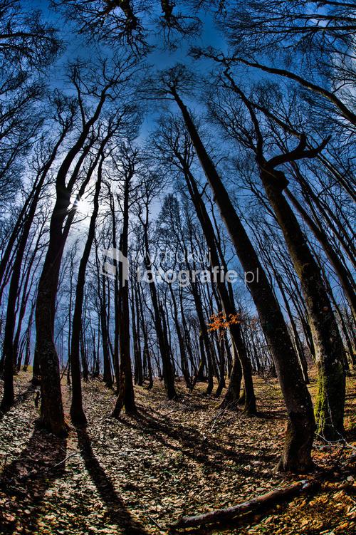 Bieszczady Cicha Dolina gdzieś na szlaku w odludziach Cichej Doliny