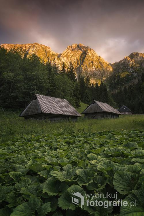 Giewont skąpany w promieniach letniego, zachodzącego słońca. Całości obrazu dopełniają liście łopianu wraz ze starymi szałasami pasterskimi.  Zdjęcie wykonane w lipcu 2017 roku.