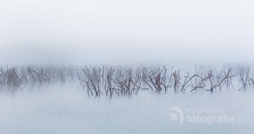 Zdjęcie opuszczonego bagna z wołającymi krzewami