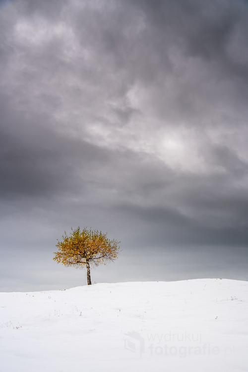 Zdjęcie powstało w drodze na Turbacz, najwyższy szczyt Gorców. Mogłem wybrać krótszą trasę, ale zdecydowałem przejść obok obserwatorium astronomicznego. Byłem tam pierwszy raz. Gdy tylko dotarłem pod obserwatorium, zobaczyłem to drzewo i od razu wiedziałem, że to jest to. Drzewko wyglądało jak gdyby zima je pominęła.