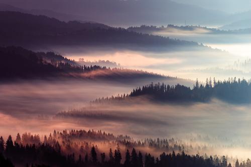 Przepiękny mglisty wschód słońca.
