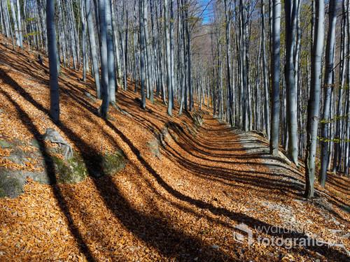 Jesienny las w beskidach na szlaku do krzyża zakochanych w Brennej.  Długie cienie skojarzyły mi się z klawiszami.
