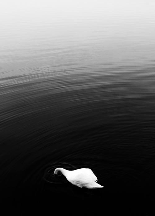 Fotografia wykonana 17 marca 2020 roku nad jeziorem w Rzeczycach na Śląsku. Zdjęcie jest backcoverem Corbeaux Magazine którego tematem wydania była fotografia czarno-biała