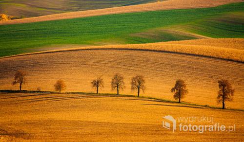 Jedno z najbardziej popularnych miejsc w czeskich morawach czyli słynna aleja kasztanów. Co roku na wiosnę oraz jesień tłumy fotografów przyjeżdżają aby sfotografować to wyjątkowe miejsce.