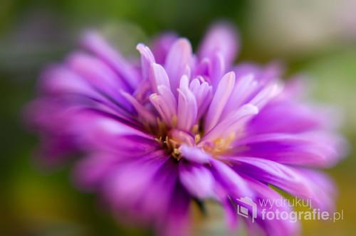 Fotografia należy do mojego cyklu, w którym próbuję odkryć na czym polega fenomen kwiatów. Zapraszam do obejrzenia innych zdjęć na ten temat.