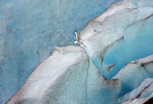 Lodowiec Nigardsbreen, Norwegia 2010.  Wyróżnienie National Geographic WKF 2013