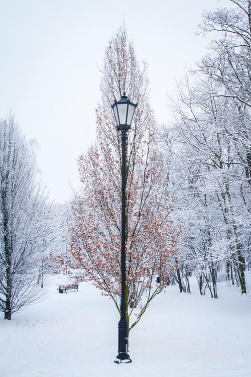 2017-01-16 - Park Kaliski zimą