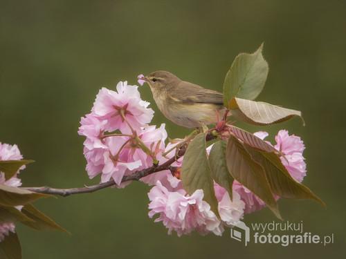 Wiosna to najlepszy czas na zdjęcia ptaków, wówczas bardzo są aktywne