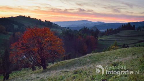 Zdjęcie wykonane jesienią 2019r. w rezerwacie Biała Woda.
