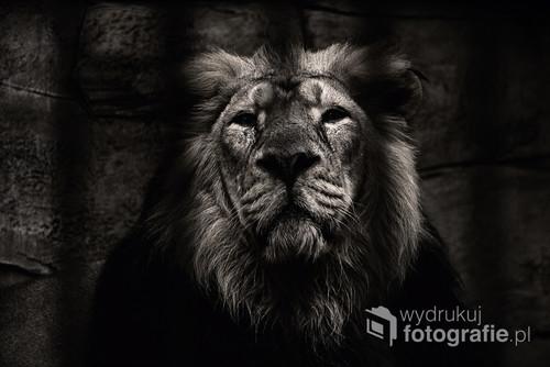 Fotografia wyróżniona w konkursie National Geographic oraz II miejsce w konkursie Amundsen Photo Award.