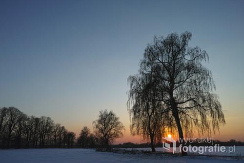 Zdjęcie wykonane o zachodzie słońca pod Poznaniem, w otulinie Wielkopolskiego Parku Narodowego. Marzec 2013.
