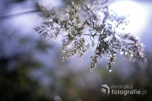 Poranna rosa na trawie w letnim słońcu
