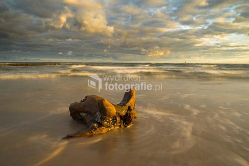 Samotny korzeń, wyrzucone przez fale Bałtyku, na plaży w Łebie o wschodzie słońca...