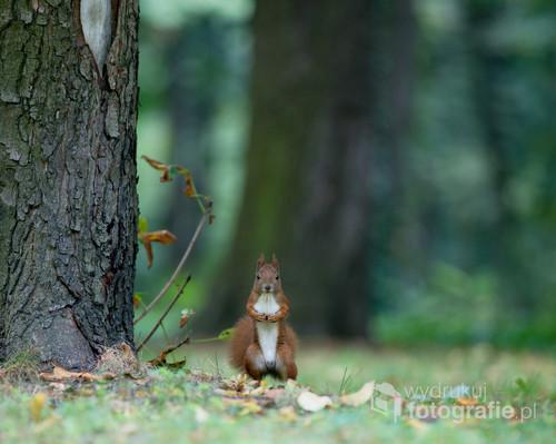 Najpierw schowała się za drzewo jak się położyłem na trawie z ciekawości wyszła się przyjrzeć.