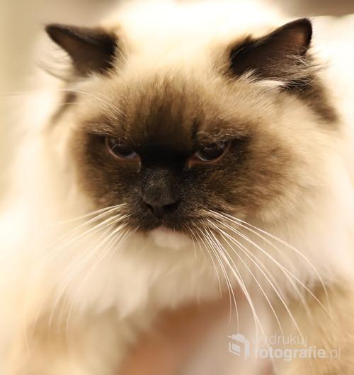 kotek z wystawy psów rasowych