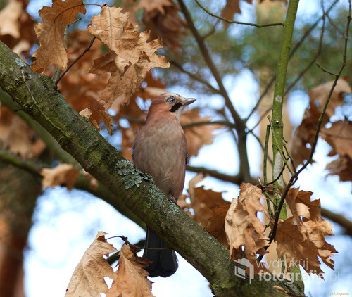 ptak z parku jesienią