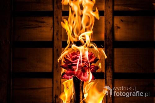 Róża w płomieniach.