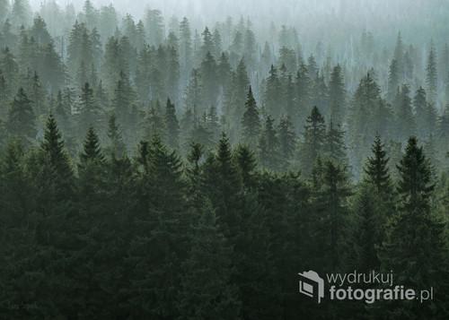 Zielone lasy na zboczach karkonoskich gór.