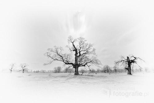 Rogalin i jego słynne dęby w dolinie rzeki Warty. Wersja czarno-biała. Polska, kwiecień 2016