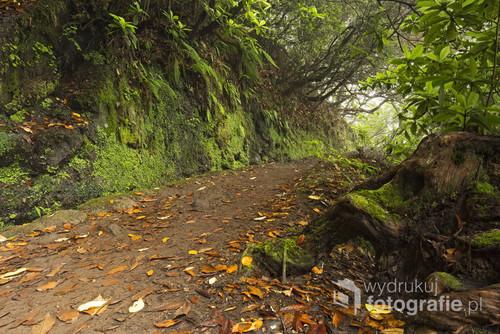 Droga wzdłuż levady, czyli rodzaju kanału nawadniającego, w stronę wodospadu Caldeirao Verde. Madera, Portugalia. Lipiec 2016