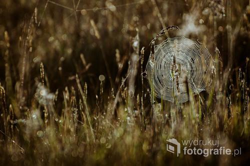 Zdjęcie wykonałam o świcie na Polanie Białowieskiej. Polana pokryta była nieskończoną ilością pajęczyn, które wyglądały niezwykle w świetle wschodzącego słońca. Zdjęcie nagrodzone wyróżnieniem National Geographic.