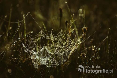 Sieć pająka w świetle wschodzącego słońca. Puszcza Białowieska 2019.