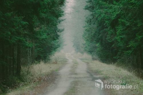 Leśny dukt w północnej części Puszczy Białowieskiej.
