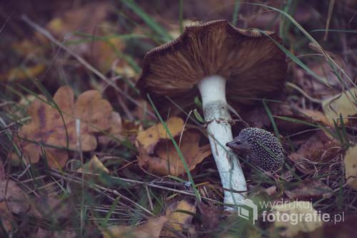 Miniaturowy, leśny świat Jeżego. Zdjęcie wykonane w okolicy Miejsca Mocy w Puszczy Białowieskiej.