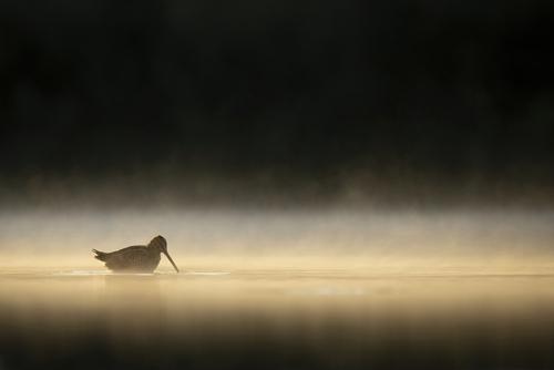 Fotografia przedstawia kszyka w porannej mgle.