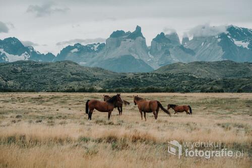 Patagonia, to nie tylko góry. Patagonia to przede wszystkim nieujarzmiona natura,piękne jeziora, dzikie zwierzęta oraz wiatr osiągający autostradowe prędkości. Na samym końcu tego wszystkiego jest człowiek, który tutaj jest tylko gościem.